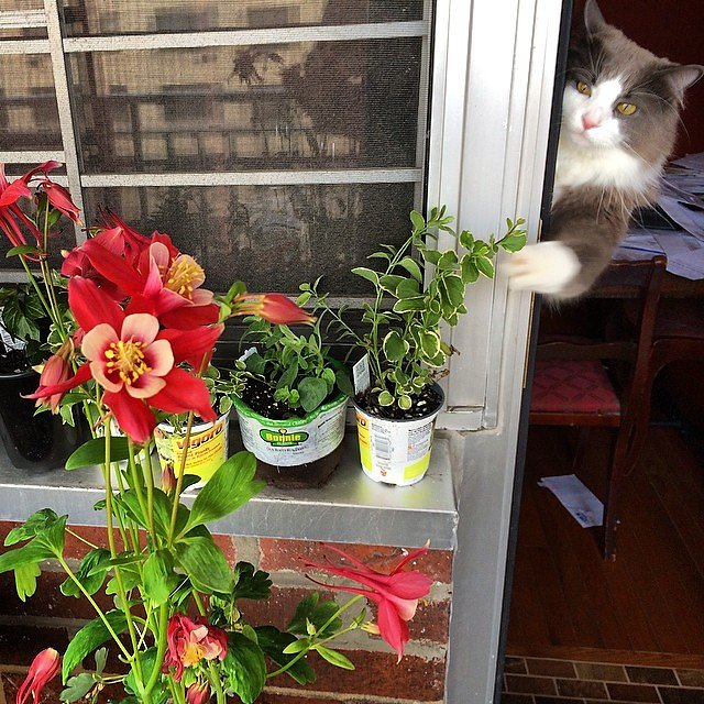 Clyde hates flowers